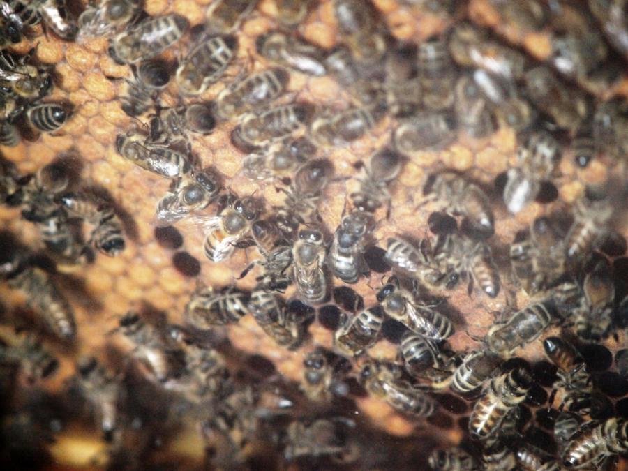 Agrarministerin will bessere Kennzeichnung für Honig