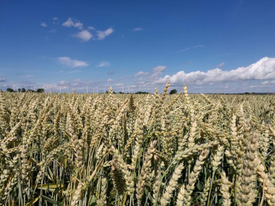 Bauernpräsident rechnet mit Ernteausfällen