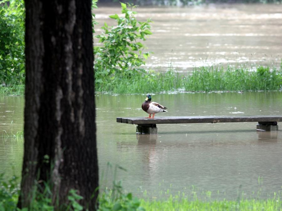 Agrarminister will Bauern besser gegen Wetterextreme absichern