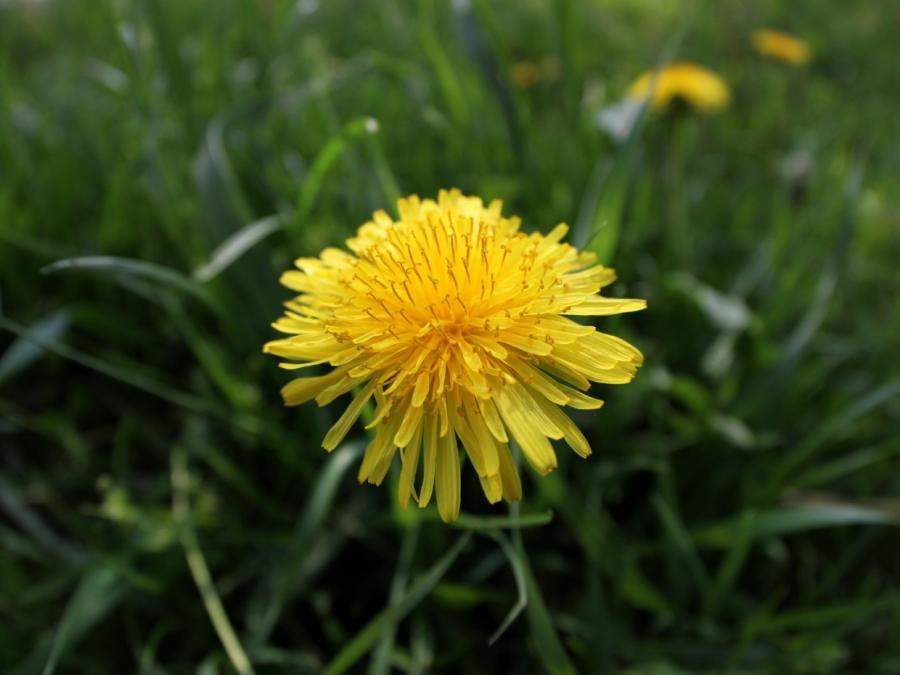 Bienenexperte: Honigbienen für Wildpflanzen unverzichtbar