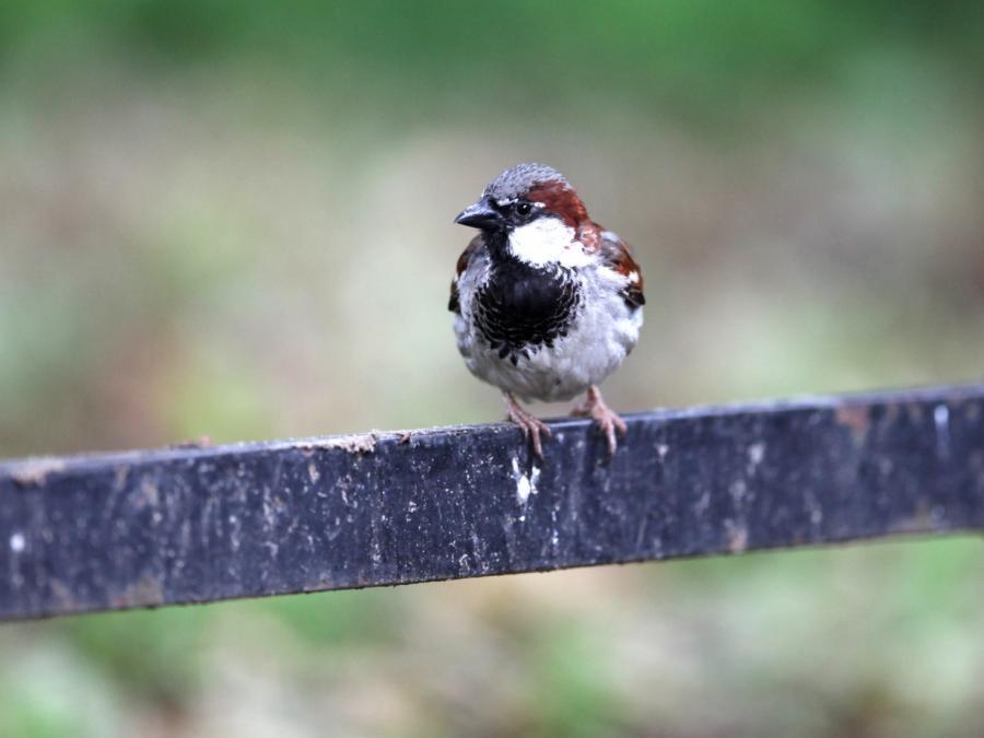 Ornithologe: Vogelfütterung im Sommer wichtiger als im Winter