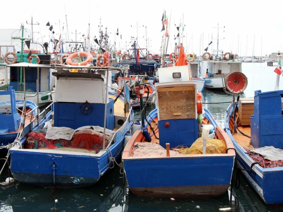 209.000 Tonnen Seefisch aus Wildfang im Jahr 2016