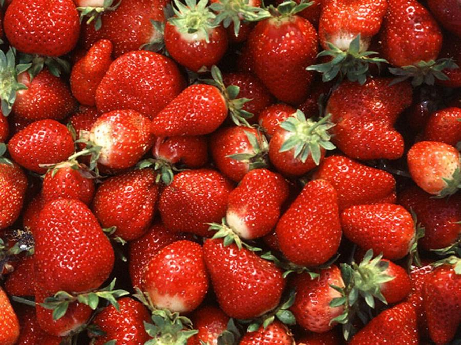 Lieferengpässe und steigende Preise für Erdbeeren erwartet