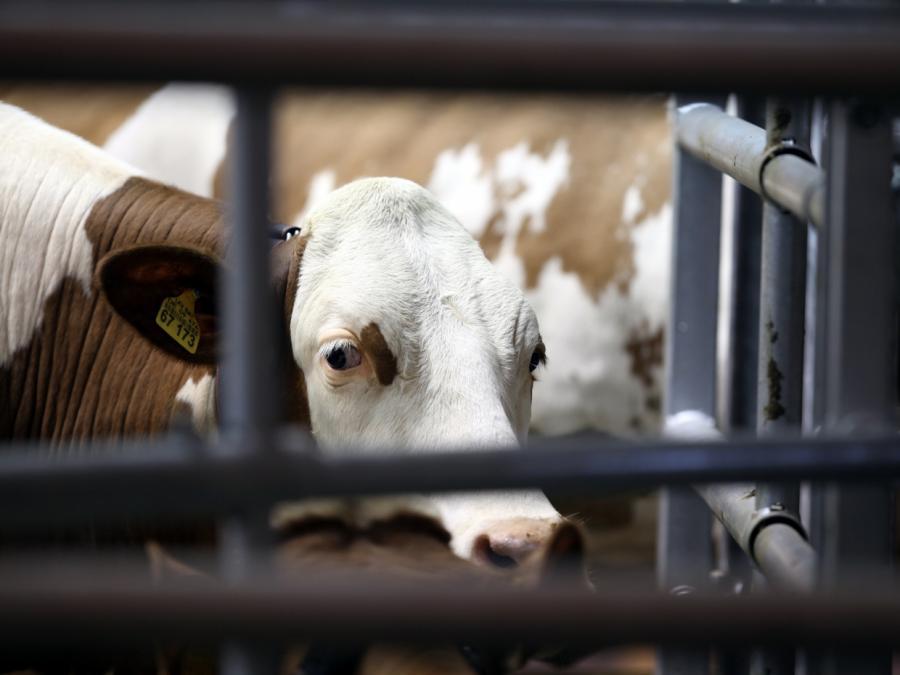 Tierschutz-Missstände bei jeder fünften Kontrolle