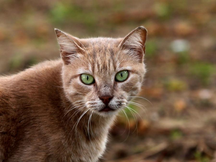 Corona-Meldepflicht für Haustiere: Bislang zwei Fälle registriert