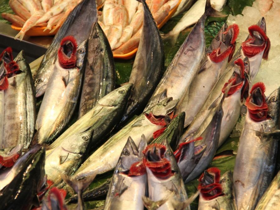 Fangmengen der deutschen Fischer brechen ein