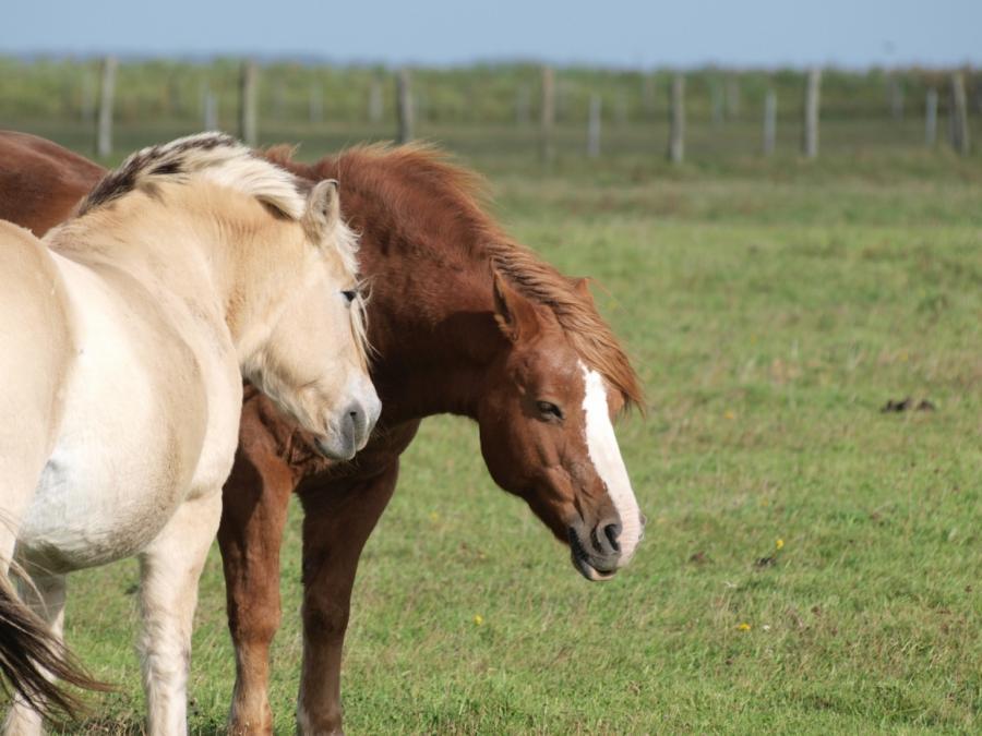 66 Festnahmen im Pferdefleisch-Skandal