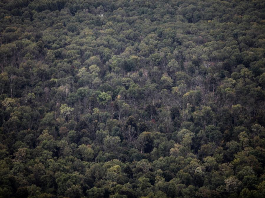 Klöckner stellt Pläne gegen Waldsterben vor