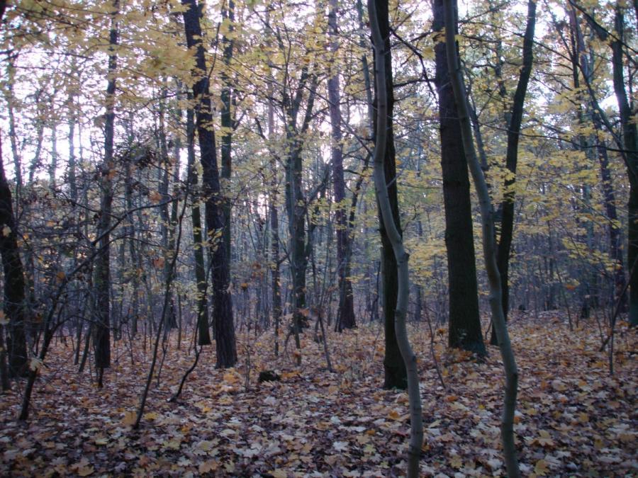 Wälder in Norddeutschland leiden unter Wassermangel