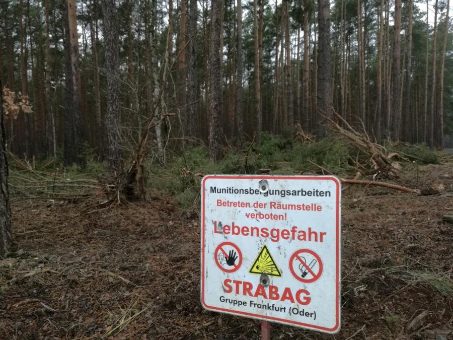Steinbach: Tesla-Fabrik in Brandenburg könnte Baurekord brechen