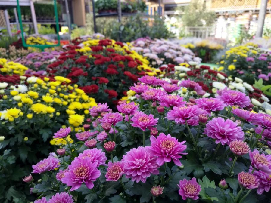 Schnittblumen im Februar deutlich teurer als im Jahresdurchschnitt