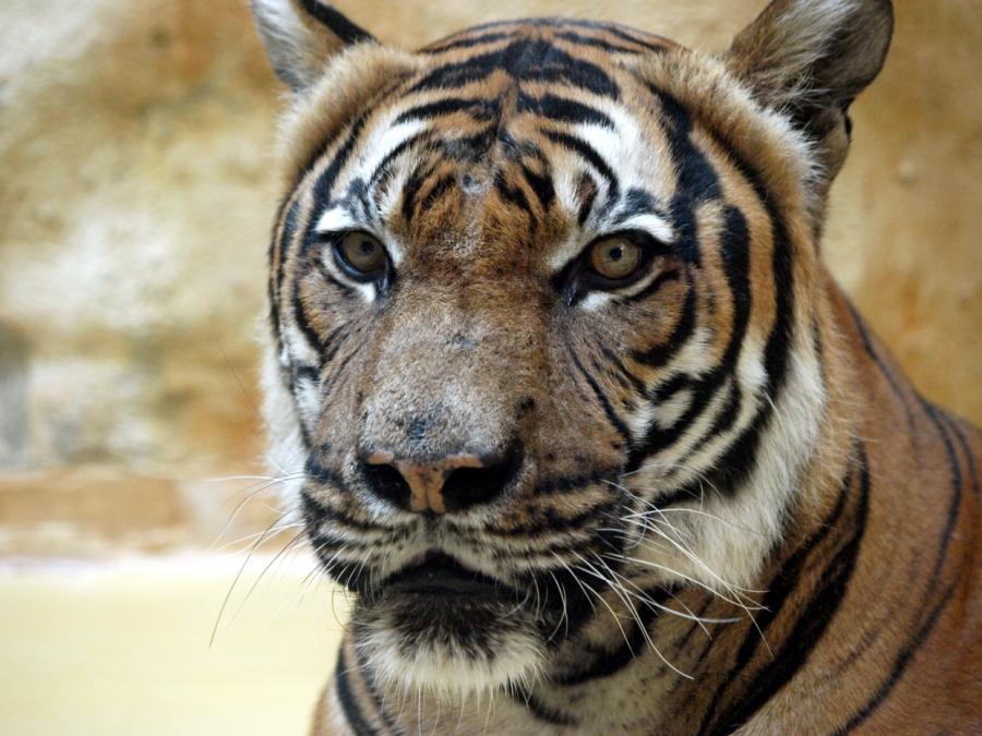 Zoo-Verband klagt über hohe Umsatzverluste