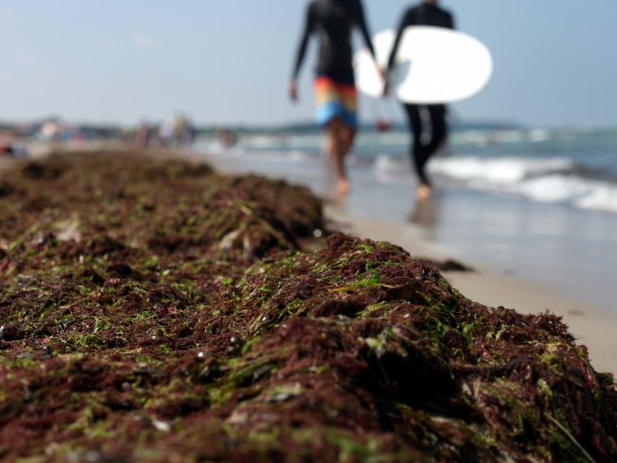 DLRG: Weniger Rettungsschwimmer an Nord- und Ostsee als sonst