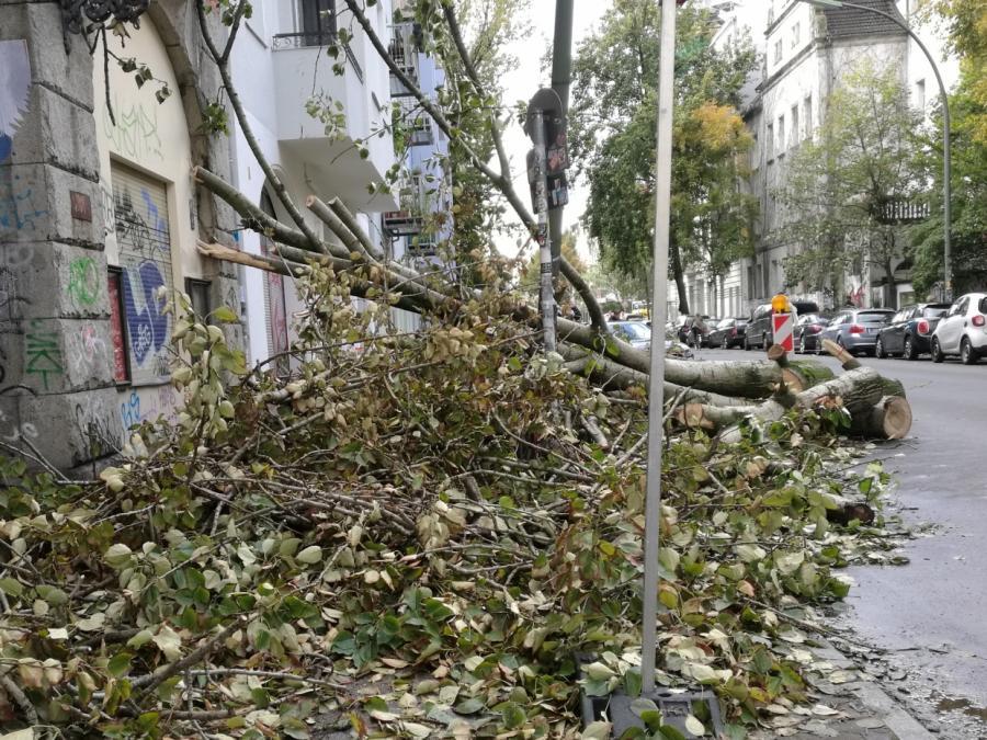 Erster Herbststurm rollt an - Warnung vor umstürzenden Bäumen