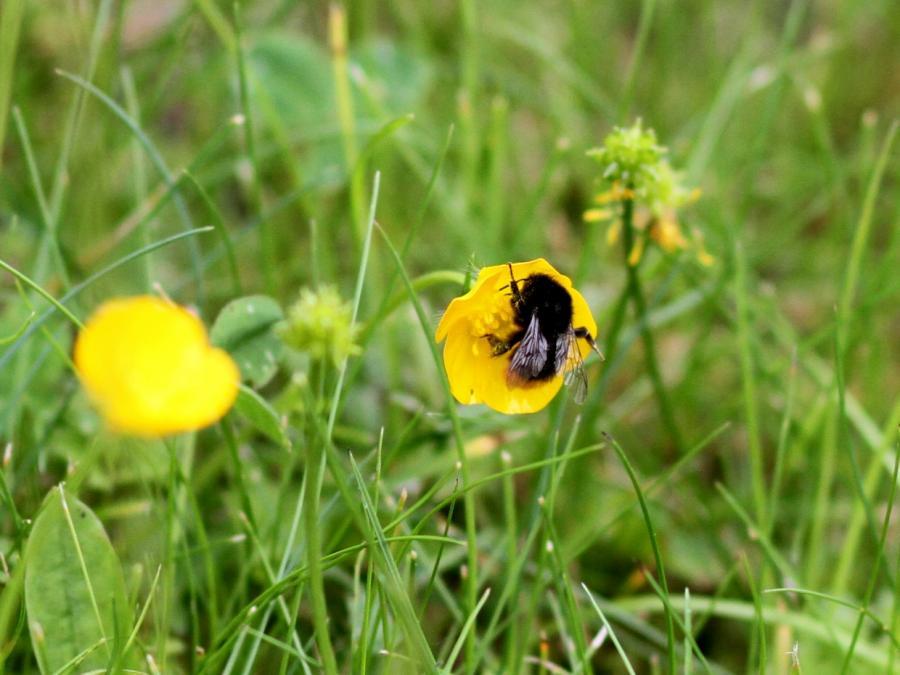 Agrarminister Schmidt kritisiert Studie zu Insektensterben