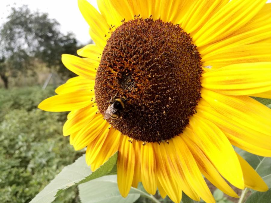 Schulze wirft Klöckner Lobbypolitik beim Insektenschutz vor