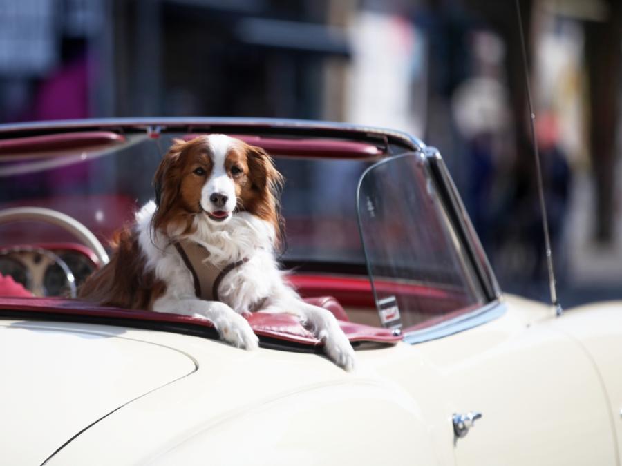Rekordeinnahmen aus Hundesteuer